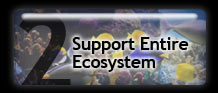 Support Entire Ecosystem